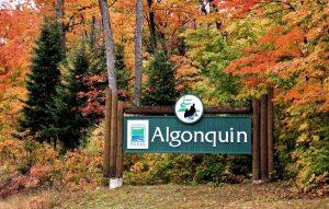 Algonquin-Park-Advantage