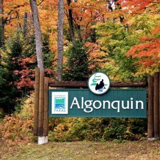 Explore Algonquin Park with Car Rental This Summer